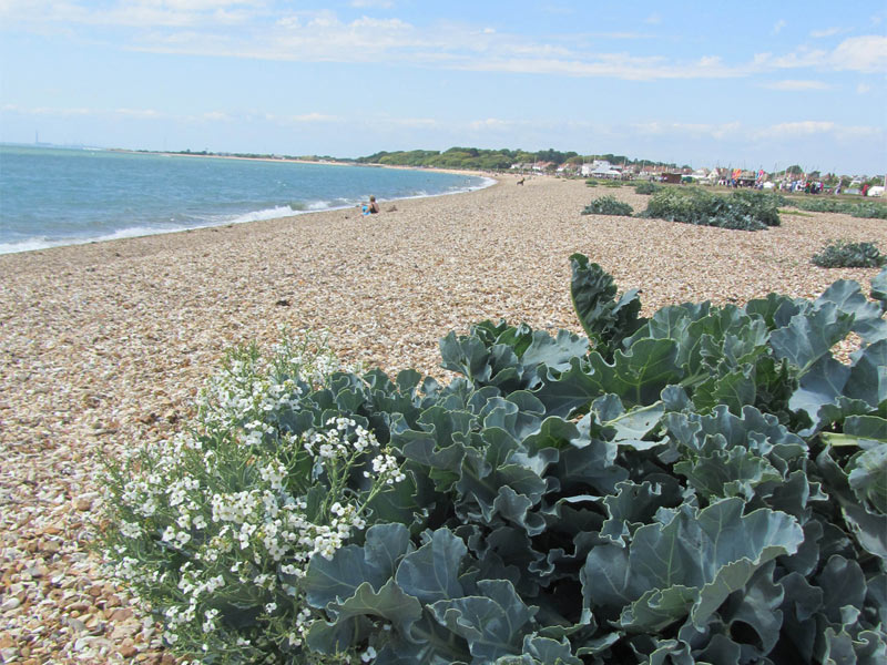 Mysteries of Stokes Bay